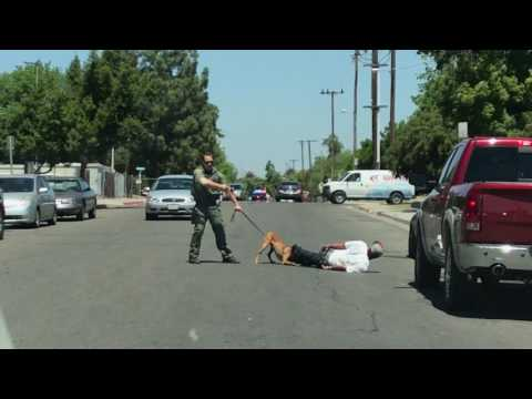 Fresno Sheriff K-9 takedown!