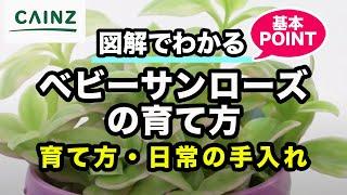 カインズオンラインショップ ~ カインズの商品がネットで買えます。 ht...