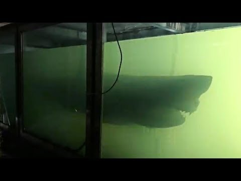 Man Explores Abandoned Wildlife Park When He Spots Huge Shark Floating In Tank Like A Ghost
