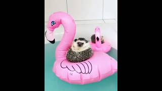 Funny Animals Compilation - Cutest Animals Ever #1 (2018)