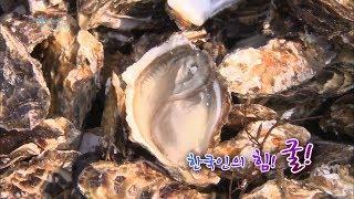 한국인의 겨울 보양식, 굴 [어영차바다야]