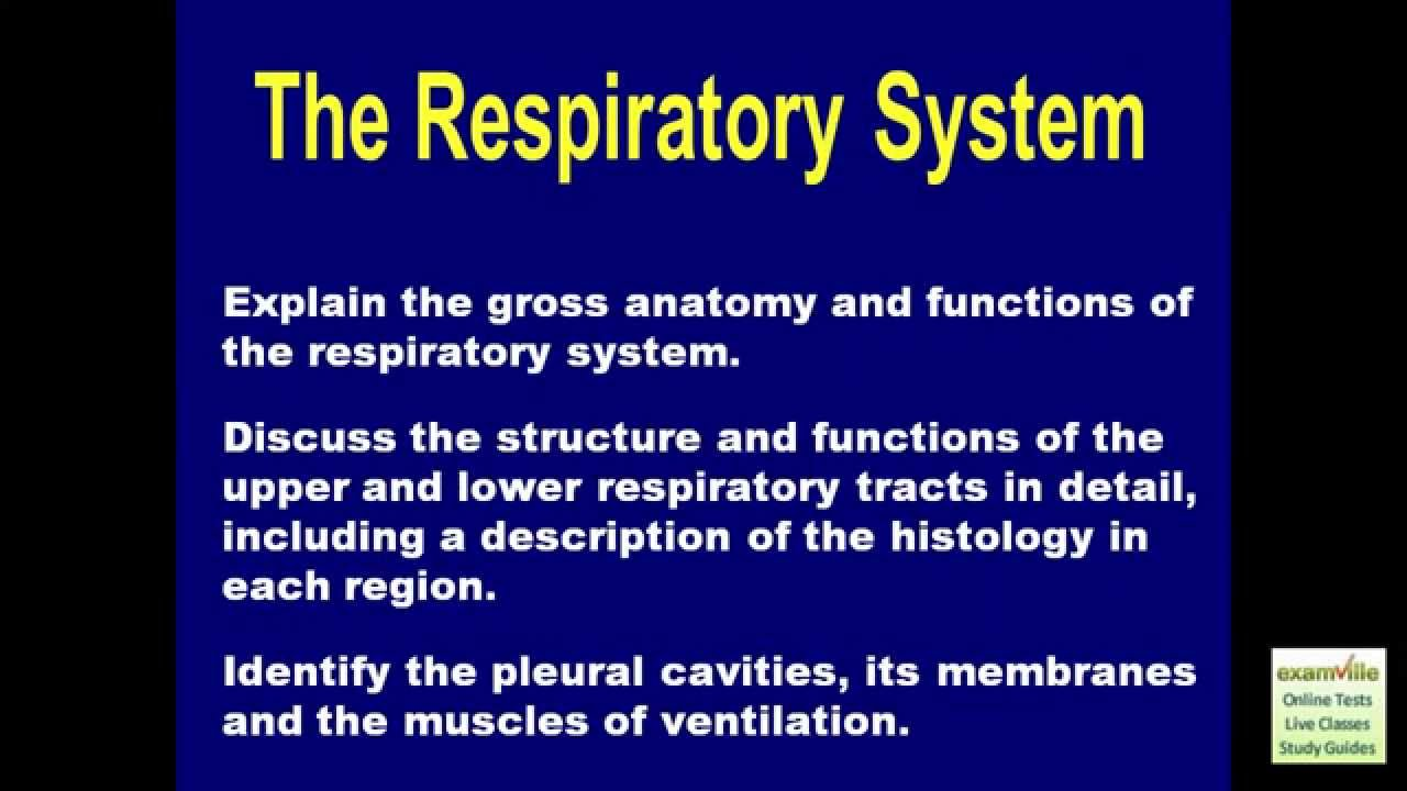 The Human Respiratory System Anatomy Review Examville Youtube