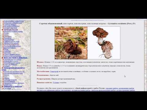 Как определить растение по внешнему виду онлайн
