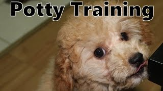 Poodle Potty Training with the Puppy Apartment - How To Potty Train Poodle Puppies Fast & Easy
