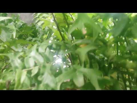 PARAH.!!! NGINTIP CEWEK SEMOX MANDI.KETAHUAAANN??!! thumbnail