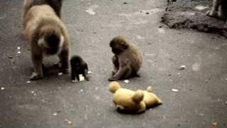 赤ちゃんサルは、本当に好奇心が旺盛です。オトメちゃん以外にリラック...