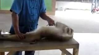 Download Hindi Video Songs - BOdy building of a monkey