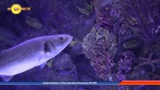akdeniz balklar trkiye denizleri akvaryumu 4k uhd