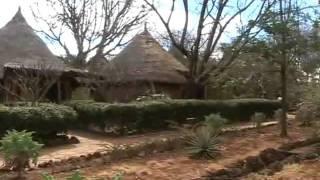 Львы в Кении реальное видео из саванны