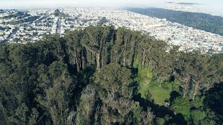 Restoring the Health of Mount Sutro Open Space Reserve