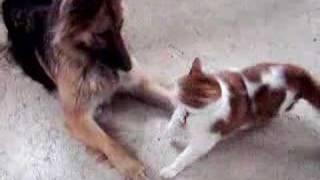 Позитив дня. Кошка и собака.