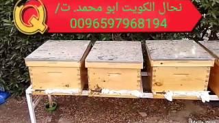 الدكتور الاول فى تربية النحل نحال الكويت بيع عسل بيع خلايا الاشراف علية ت 0096597968194 Youtube