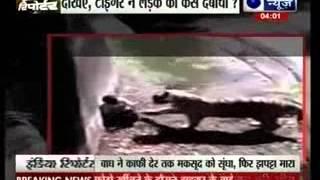 White tiger kills youth at Delhi zoo