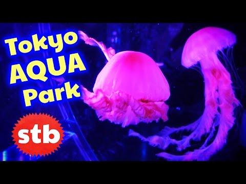 Things To Do In Tokyo, Japan: Aqua Park Aquarium // SoloTravelBlog
