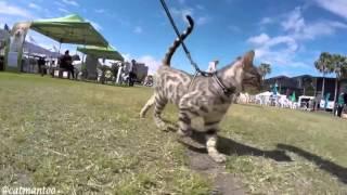 Котэ. Кот инспектор на выставке собак
