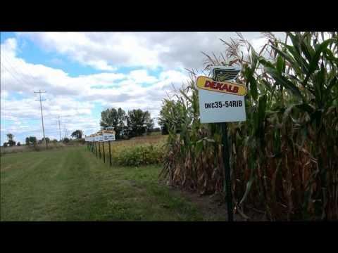 Monsanto DEKALB GMO Testing (Near Ottawa ON)