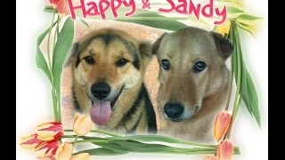 "If I Could Bring Them Back""My Dearest Pets""Happy & Sandy"" Share this Song"