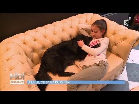 le premier bar chiens d 39 europe est lille youtube. Black Bedroom Furniture Sets. Home Design Ideas