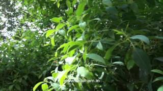 Medicinal Plants & their Medicinal Uses