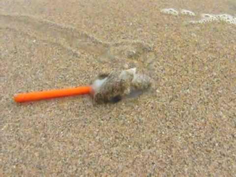 Snail attacks pencil