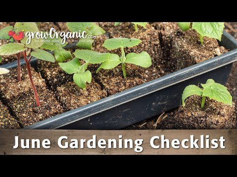 June Gardening Checklist: 19 Tips to Keep Your Organic Garden Healthy in June