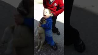 Pashto funny video child vs dog pthan /pk