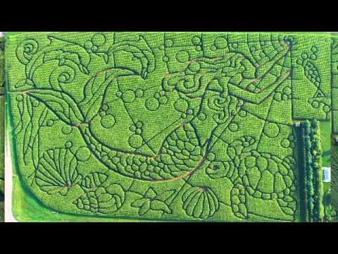 how i design the treinen farm corn maze part one mp4 youtube