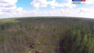 Лес: Закон об учёте древесины