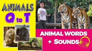 Animal Sounds 🎧 Words starting with Letters Q,R,S and T | Animal Words Beginning With Q,R,S and T