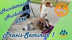 ❌Das Erste Praxisseminar, ❌ATN Hundetrainer Studium, ❌Lernen und erziehung1, Erfahrungsbericht