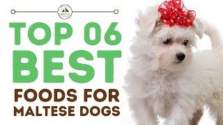 Best Foods for Maltese Dogs