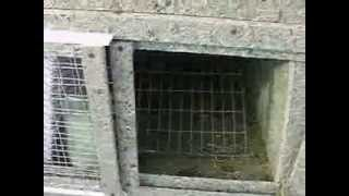 Сенник Клетка для кроликов Pavlovich