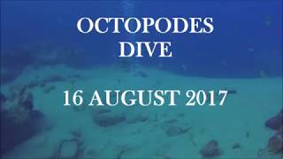 Video octpus August 17 sta download MP3, 3GP, MP4, WEBM, AVI, FLV September 2017