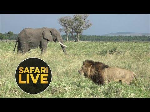 safariLIVE - Sunrise Safari - July 31, 2018