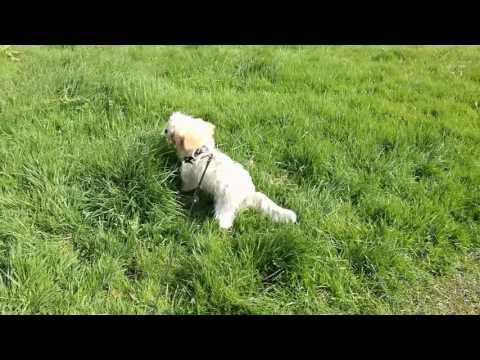 Monty's walk to Sharpham.