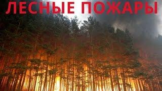 Лесные пожары(Лесные пожары Тушение лесных пожаров в России продолжается Лесные пожары 2015 года охватили огромную террит..., 2015-08-31T09:27:10.000Z)