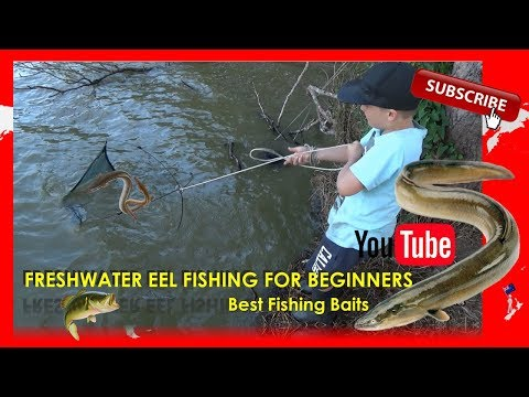 Freshwater Eel Fishing For Beginners - Best Fishing Baits!
