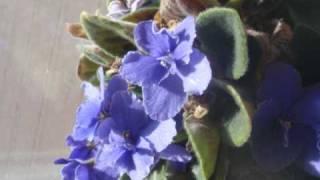 Johnny Horton - Hot in the Surgarcane Field YouTube Videos