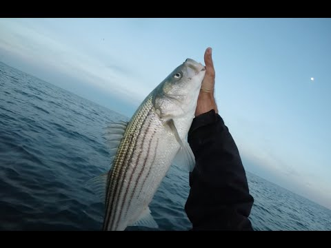 Striper fluke fishing new jersey december 20th via kayak for Fluke fishing nj
