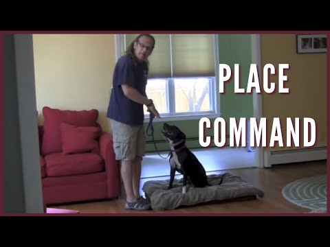 Place command How To Dog Training