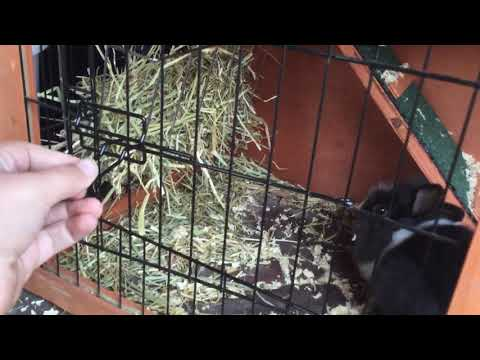 nieuw konijnenhok
