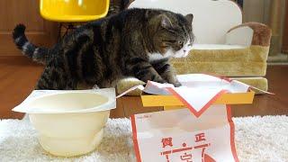 鏡開きを楽しむねこ。Maru enjoys opening the Kagamimochi.