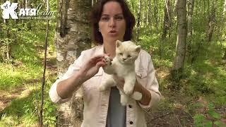 Котенок бежевый игрушка