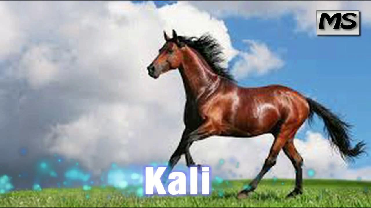 Kafshet shtepiake per femije youtube for Disegno cavallo per bambini