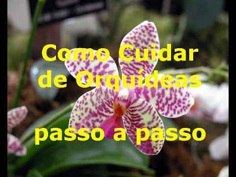 COMO CUIDAR DE ORQUÍDEAS PASSO A PASSO