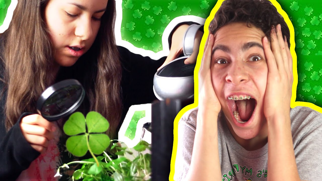 Finding A Four Leaf Clover On St Patricks Day