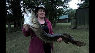 Рыбалка на озере Папес Лиепайский район Лето 2020