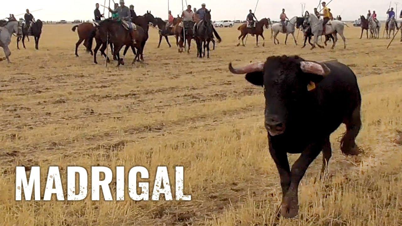 Madrigal 2019 Toros Bravos Por El Campo Youtube