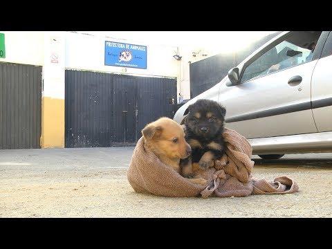 Perros abandonados: No los abandones