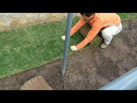 Как посадить рулонный газон своими руками видео